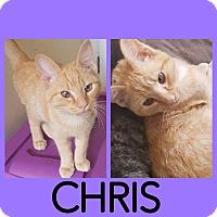 Adopt A Pet :: Chris - New Milford, CT