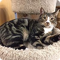 Adopt A Pet :: MARLEY - Brea, CA