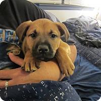 Adopt A Pet :: Bruce - Bowie, MD