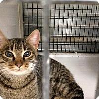 Adopt A Pet :: Tibbs - Shelbyville, TN