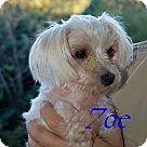 Adopt A Pet :: Zoe (GA)