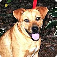 Adopt A Pet :: Etta - Franklin, TN