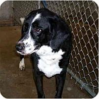 Adopt A Pet :: Coolidge - Scottsdale, AZ