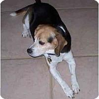 Adopt A Pet :: Tug - Phoenix, AZ