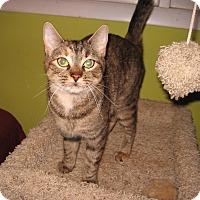 Adopt A Pet :: Sarah - Colmar, PA