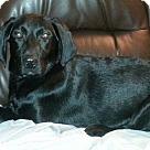 Adopt A Pet :: Angus