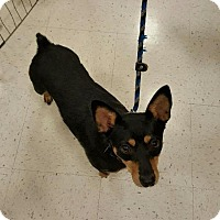 Adopt A Pet :: Fiona in CT - East Hartford, CT