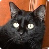 Adopt A Pet :: Travis - Medford, MA