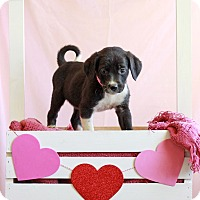 Adopt A Pet :: Elizabeth - Waldorf, MD