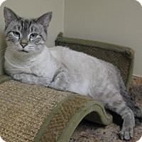 Adopt A Pet :: Dusty - Gary, IN