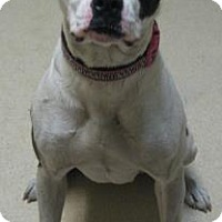 Adopt A Pet :: Samantha - Gary, IN