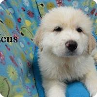 Adopt A Pet :: Zeus - Bartonsville, PA