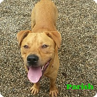 Adopt A Pet :: Parish - Muskegon, MI