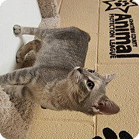Adopt A Pet :: Rey - Smithfield, NC