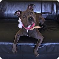 Adopt A Pet :: Fiona - Philadelphia, PA