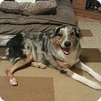Adopt A Pet :: Bandit - Greeley, CO