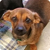 Adopt A Pet :: BLACKIE - Anderson, SC