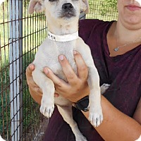 Adopt A Pet :: Evan - Saddle Brook, NJ