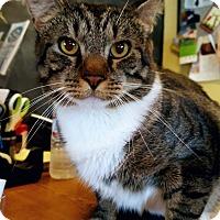 Adopt A Pet :: Gannet - Salisbury, MA
