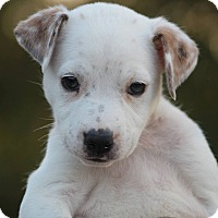 Adopt A Pet :: Rosemary - CUMMING, GA