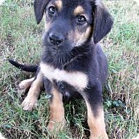 Adopt A Pet :: Merabelle - Trenton, NJ
