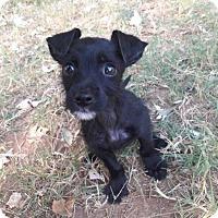 Adopt A Pet :: Merlin - Brownsboro, AL