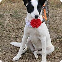 Adopt A Pet :: Nancy - Lacey, WA