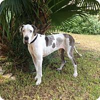 Adopt A Pet :: Beazley - Austin, TX