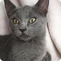 Adopt A Pet :: Rina - Kailua-Kona, HI