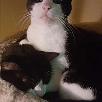 Adopt A Pet :: Oliver - Lauderhill, FL