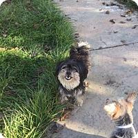 Adopt A Pet :: Percy - Vacaville, CA