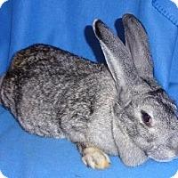Adopt A Pet :: Bess - Woburn, MA