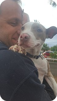 Staffordshire Bull Terrier/Terrier (Unknown Type, Medium) Mix Puppy for adoption in Phoenix, Arizona - Thelma