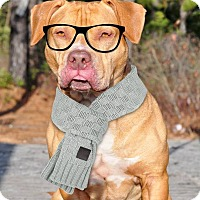 Adopt A Pet :: Bolt - Manahawkin, NJ