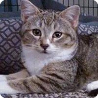 Adopt A Pet :: Zane - Walworth, NY