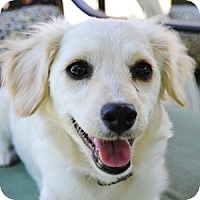 Adopt A Pet :: Willie - La Costa, CA