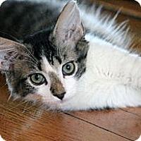 Adopt A Pet :: Jamaica - Chicago, IL