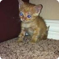 Adopt A Pet :: Dill - Justin, TX