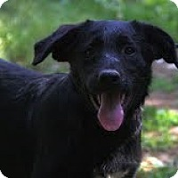 Adopt A Pet :: Flint ($200 adoption fee) - Brattleboro, VT