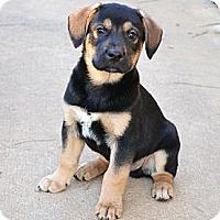 Adopt A Pet :: *Spike - PENDING - Westport, CT