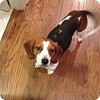 Adopt A Pet :: Dixie - Marietta, GA