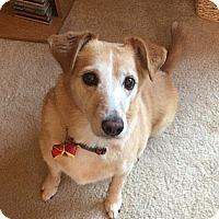 Adopt A Pet :: Shelby - Raritan, NJ