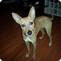 Adopt A Pet :: TACO - Brooksville, FL