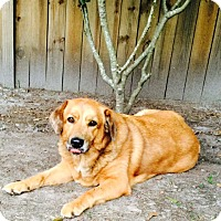 Adopt A Pet :: Skye - New Canaan, CT