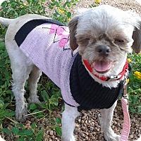 Adopt A Pet :: Pippy - Las Vegas, NV