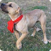 Adopt A Pet :: Sparkle - Fort Collins, CO
