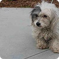 Adopt A Pet :: Cookie - Encino, CA