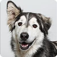 Adopt A Pet :: Sparta - San Luis Obispo, CA