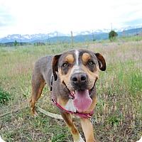 Adopt A Pet :: Tuff - Ridgway, CO