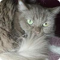 Adopt A Pet :: Scarlett - Purebred - Ennis, TX